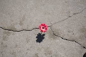 If a flower can grow through cement, you can achieve anything!